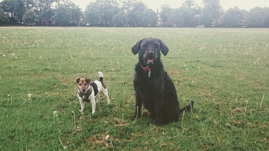 The K9 Crew - Dog Walkers Doncaster