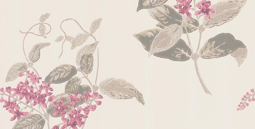 Cole & Son - Archive Anthology Madras Violet Pink 100/12058
