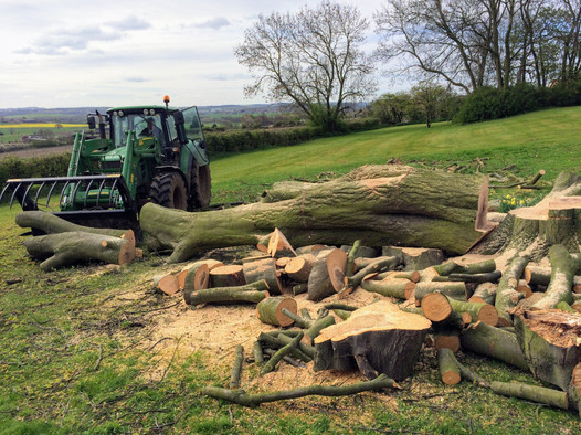 Tree Surgeon Doncaster