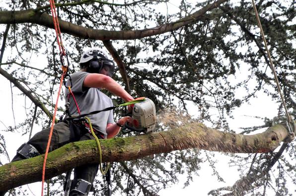 Tree Surgeon Rotherham