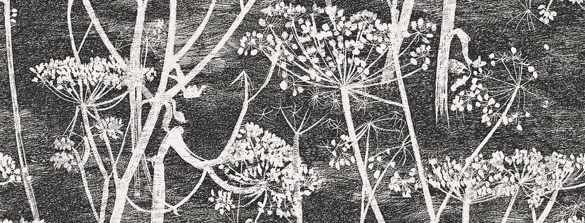 Cole & Son - The Contemp Coll Cow Parsley Soot & Snow 66/7046