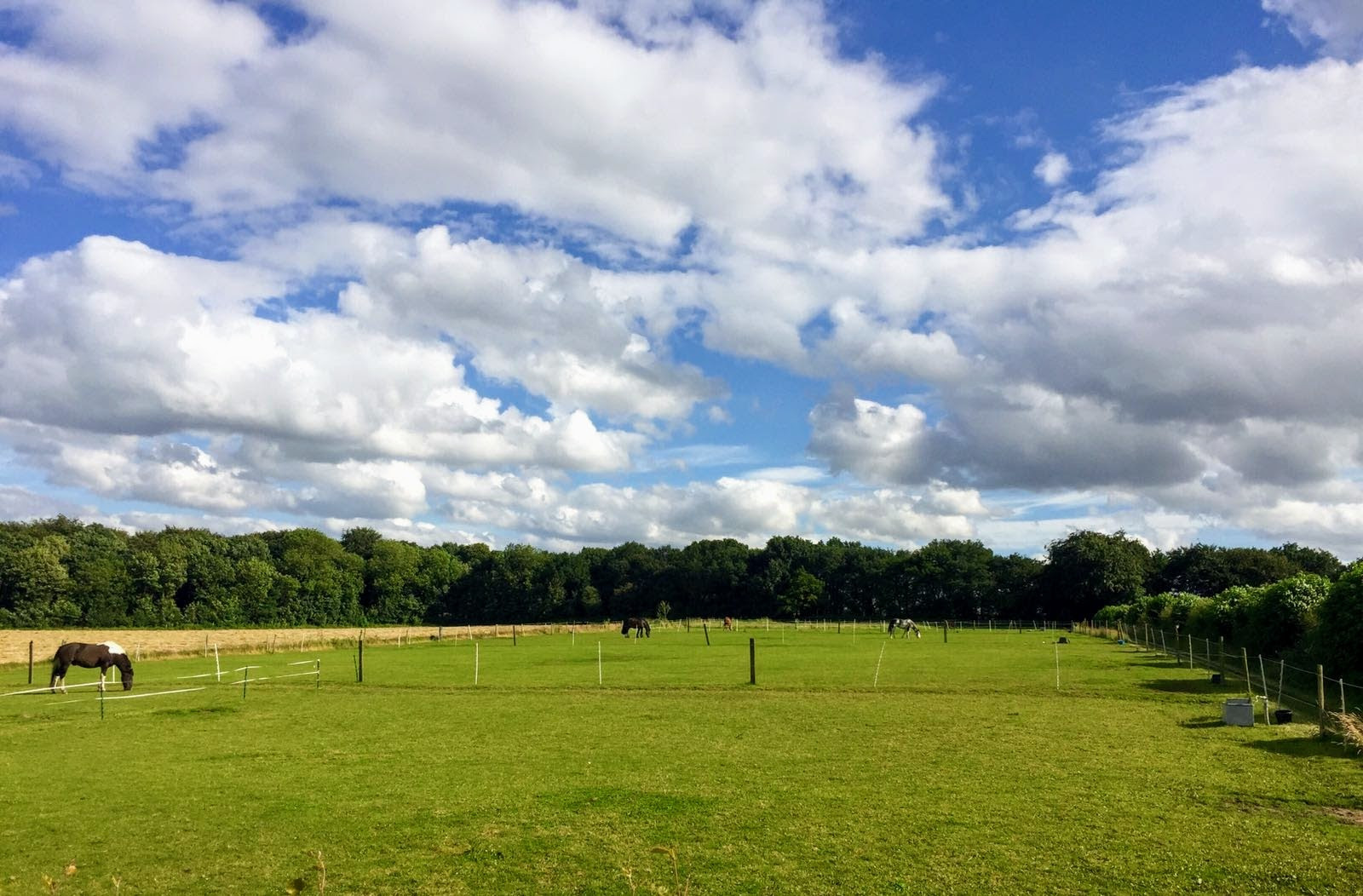 Livery Stables Rotherham