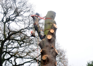 Tree Surgeon Barnsley