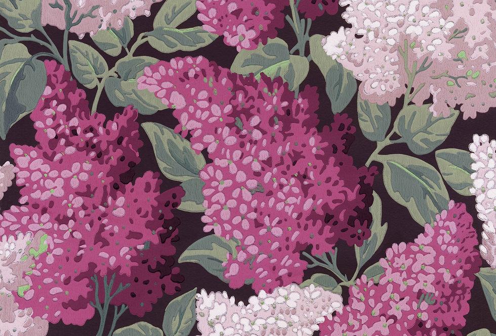 Cole & Son - Botanica Lilac Grandiflora Magenta & Blush on Charcoal 115/15045