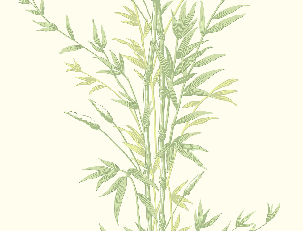 Cole & Son - Archive Anthology Bamboo Green 100/5023