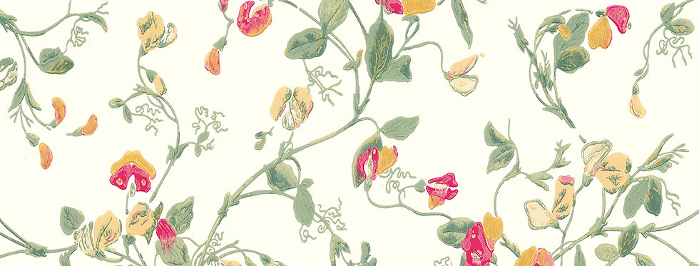 Cole & Son - Archive Anthology Sweet Pea Pink & Yellow 100/6027