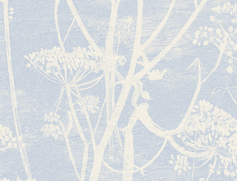 Cole & Son - New Contemporary Cow Parsley Blue 66/7050