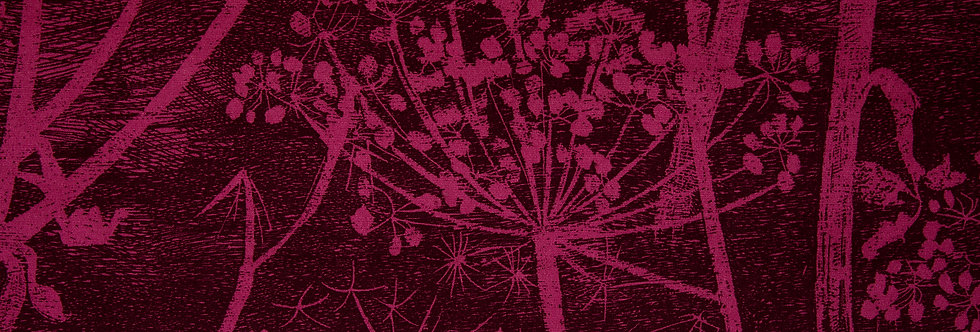 Cole & Son - The Contemp Coll Fabrics Cow Parsley Magenta & Plum F111/5017