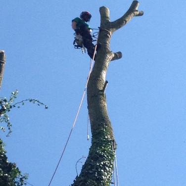 Haywood Tree Specialists. Tree Surgeon Sheffield.
