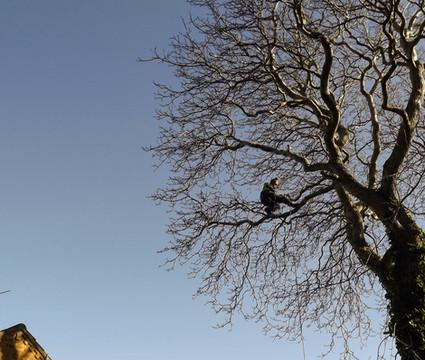 Tree Surgeon Doncaster