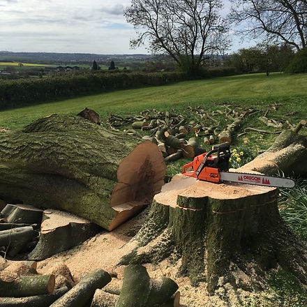 Tree Surgeon Sheffield