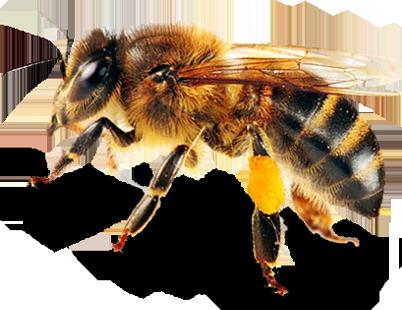 Masonry Bee