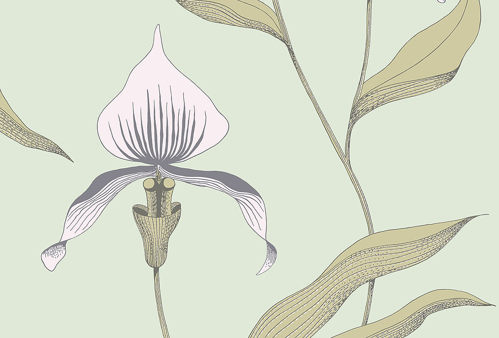 Cole & Son - New Contemporary Orchid Pink 66/4028