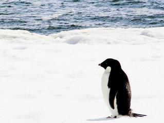 MetaSensing in Antarctica