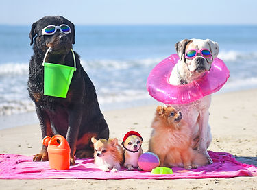 group of dogs sitting on the beach.jpg