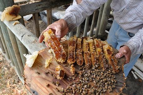 Filigreen-Biodynamic-Honey-Boonville.jpg