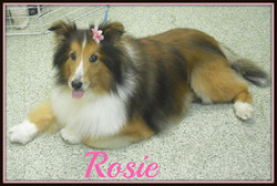 rosie3