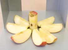 사과(Apple)