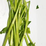 미나리(Water parsley)
