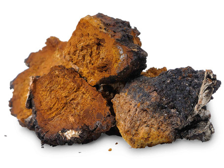 Science of Chaga