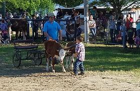 Trained Steer.jpg