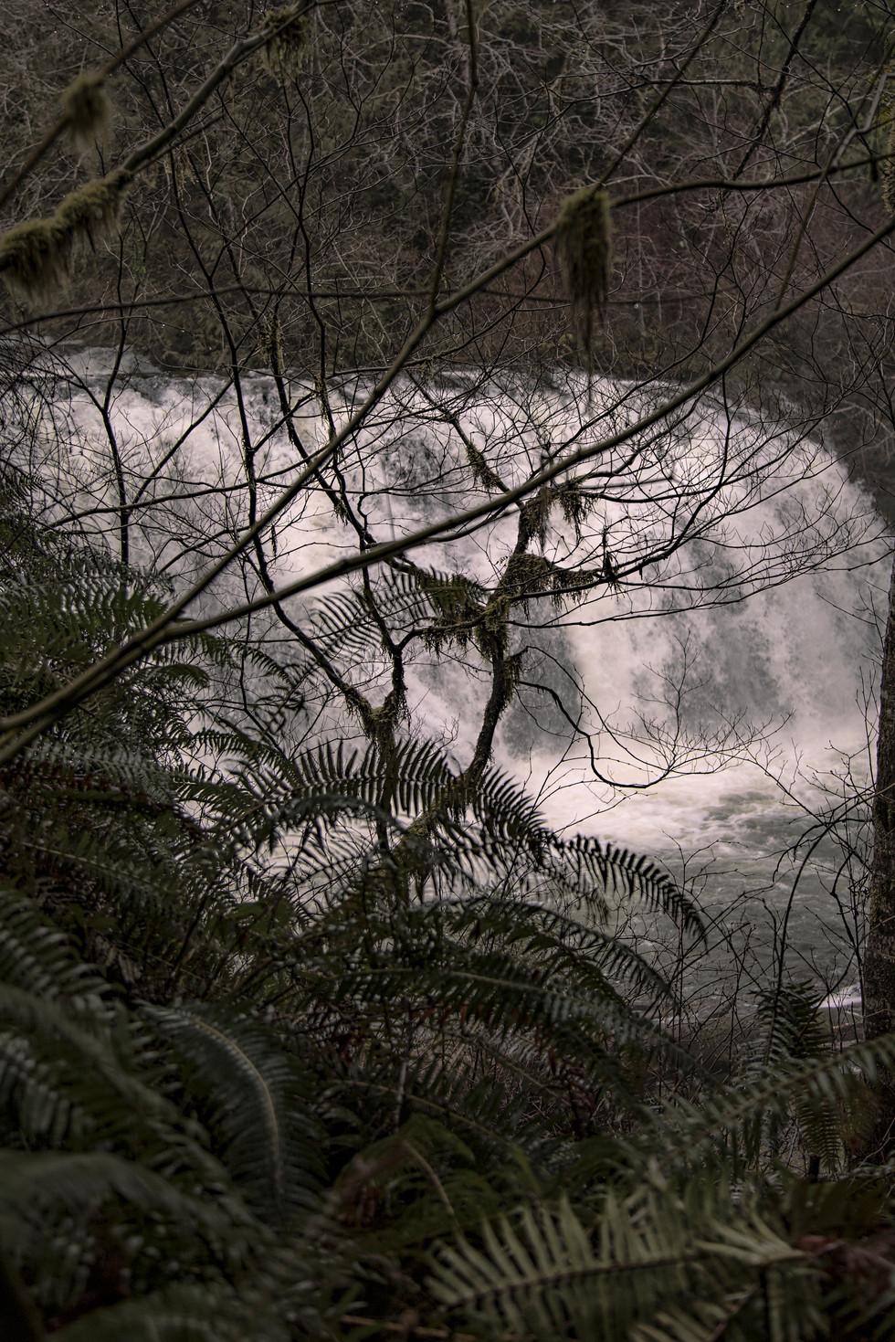 Waterfall, Olympic National Park, WA