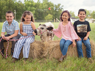 Mini Cow Session - Kinley Rose Photography, Ludowici, GA Newborn Photographer