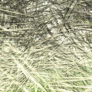 35-palm leaves-0-1 .jpg