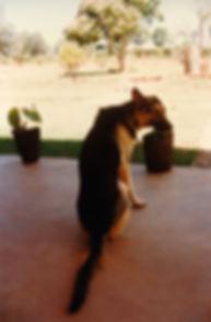 1998-AMBOHIBAO-LE CHIEN.jpg