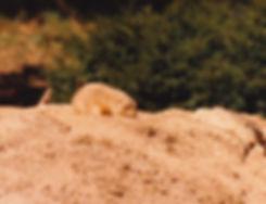 1983-SHENANDOAH-8.jpg