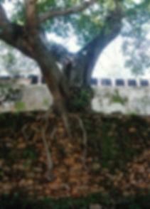 AMBOHIMANGA-11.jpg