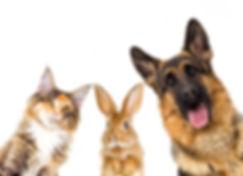 animali_affezione--1024x739.jpg