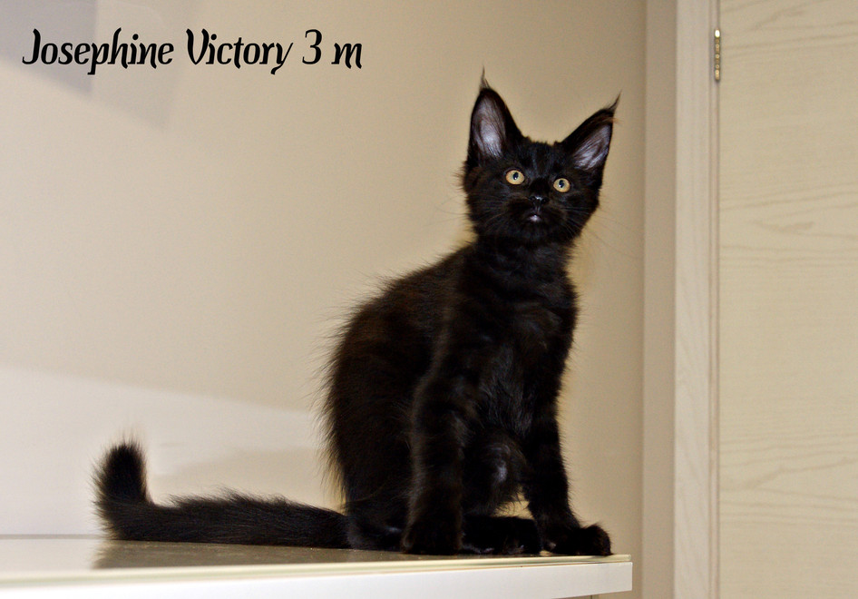 Josephine Victory 3 месяца