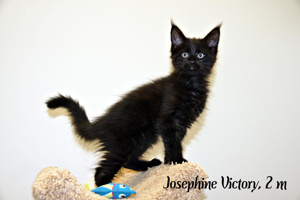 Josephine Victory 2 месяца