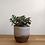 Thumbnail: Plant Pot