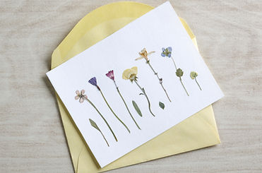 Photo of pressed flowers