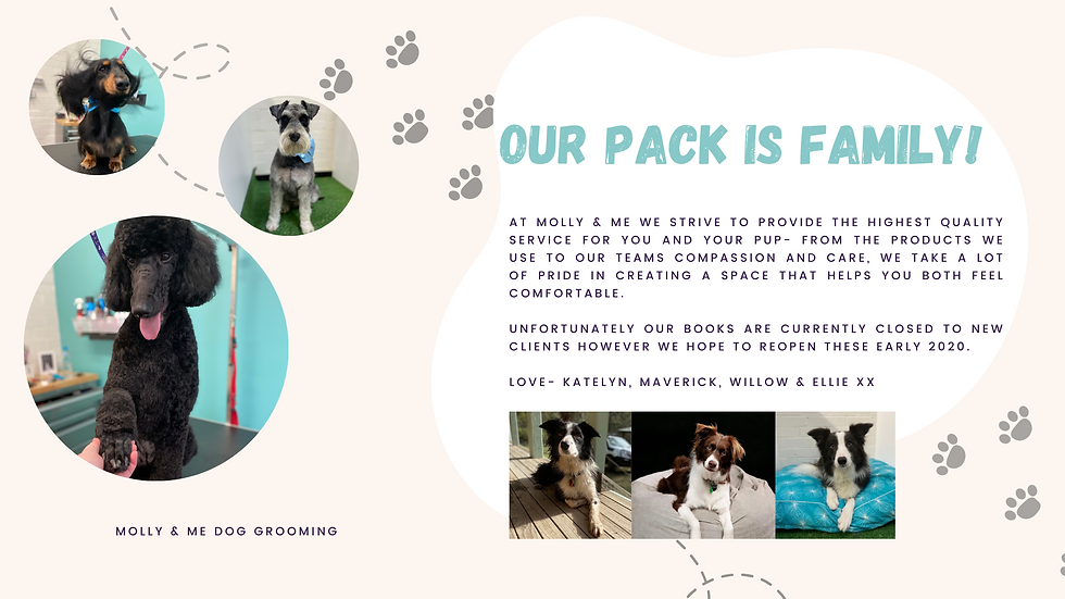 Illustrative Cute Dog Training and Grooming Presentation.png