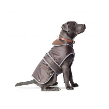 A dog wearing an Ancol Stormguard waterproof dog coat