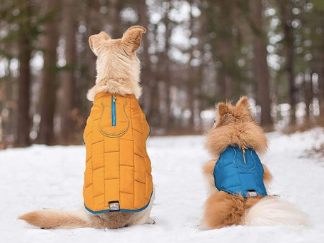 Top 10 Dog Coats : Walk the Streets in Style