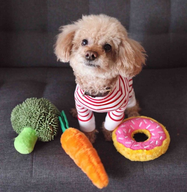 dog with subscription box plush toys