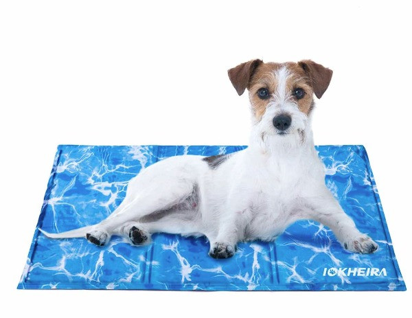 Jack Russell on a blue cooling mat from Iokheira