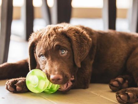 Top 10 Indestructible Dog Toys : Tough Toys