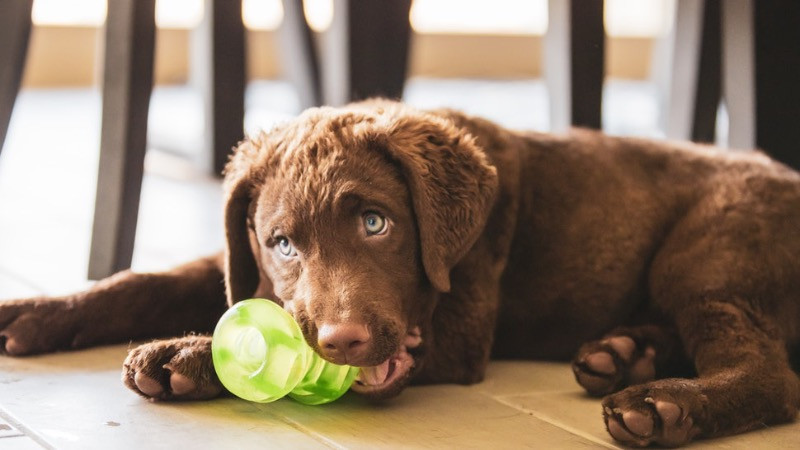 dog with tough toy