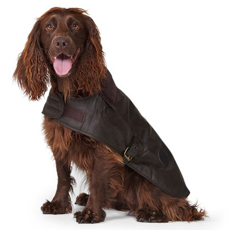 A spaniel wearing a Barbour dog coat