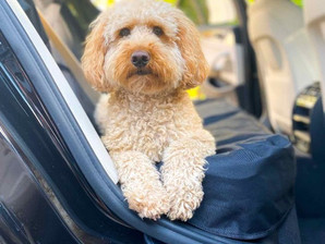 Top Dog Car Seat Covers for 2021