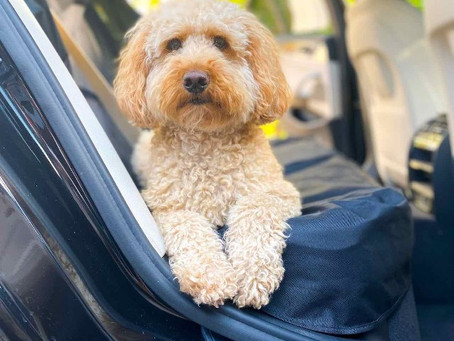 Top 10 Dog Car Seat Covers