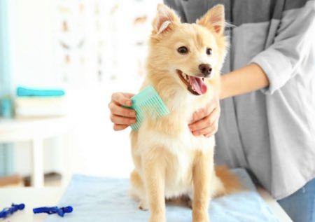 Dog being brushed at home