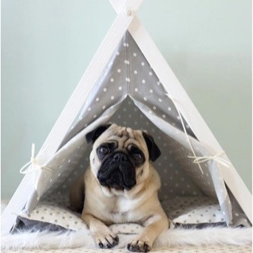 From dog teepees to extra-large beds and everything in-between