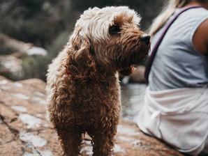 Top Dog Travel Bag Essentials