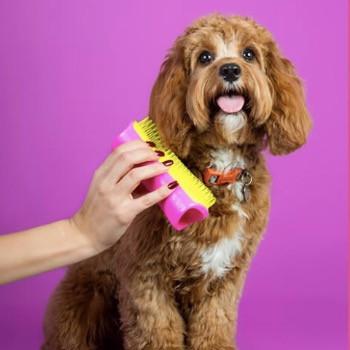 Pet teezer dog brush and a cockapoo